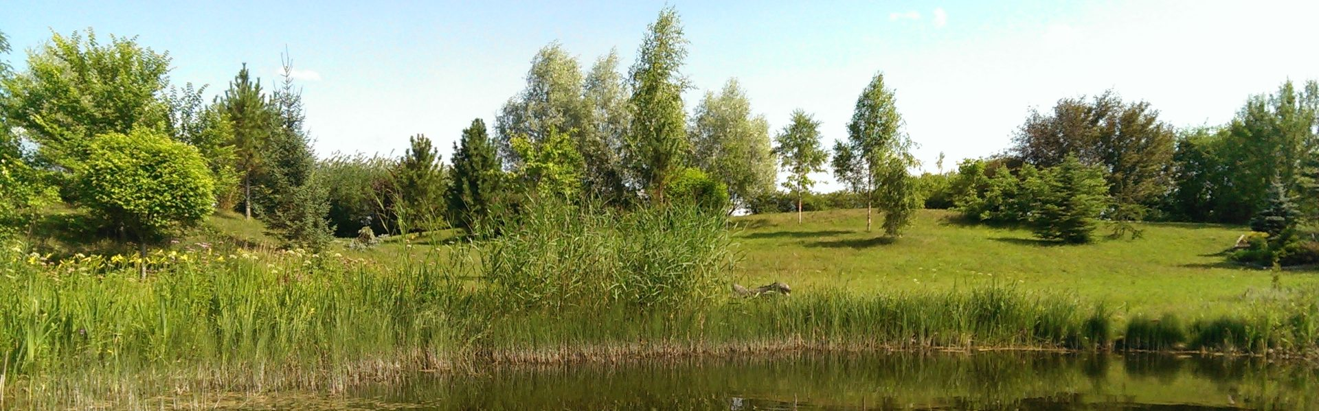 Dendropark Smaragd